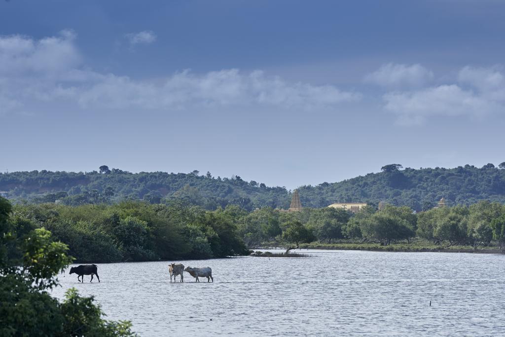 Отдых в отеле Amarante Bay Hotel Тринкомали Шри-Ланка