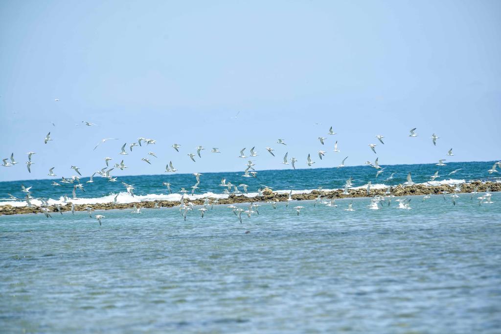 Туры в отель Sun Aqua Passikudah Пасикуда Шри-Ланка
