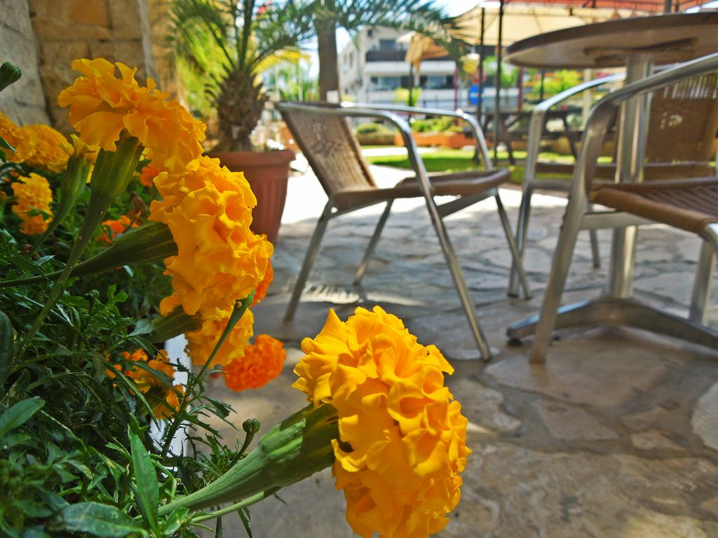 Фото отеля Estella Hotel Apts