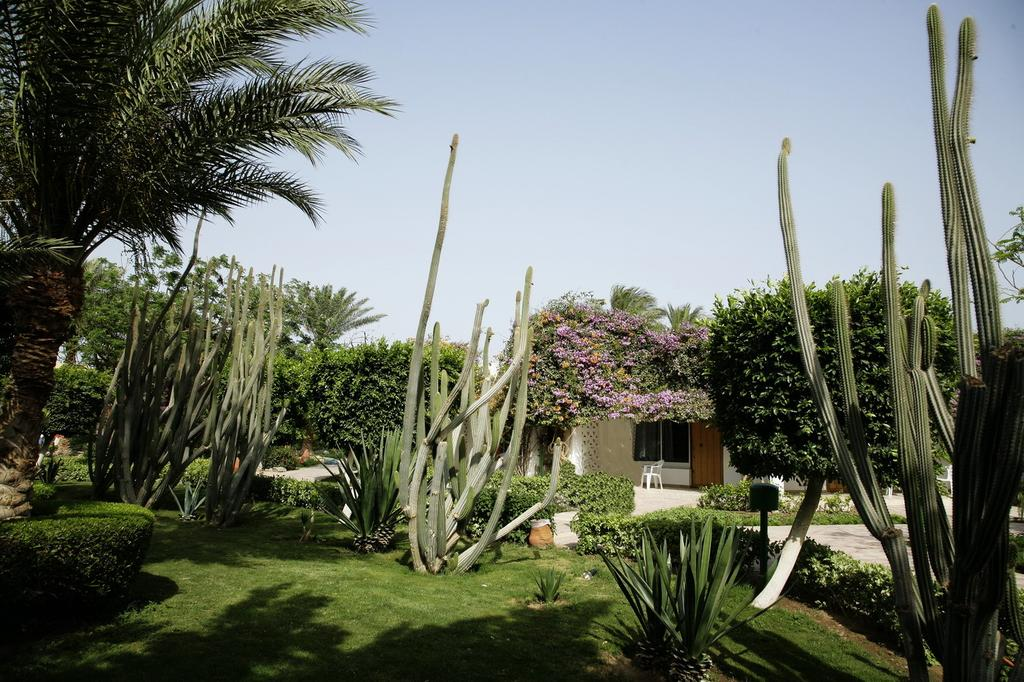 Туры в отель Shams Safaga Beach Resort