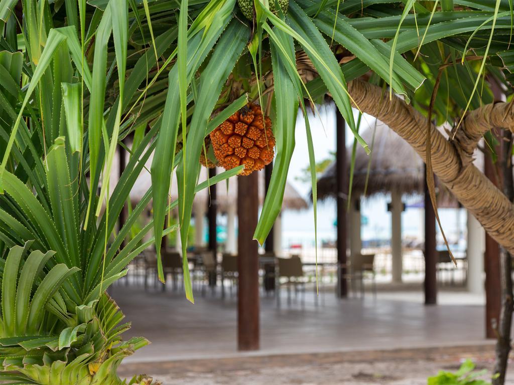 Відпочинок в готелі Cocoon Maldives Лавіані Атол