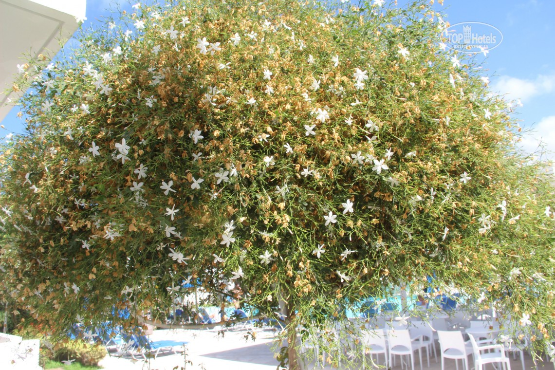 Туры в отель Aliathon Aegean (ex. Aliathon Holiday Village)