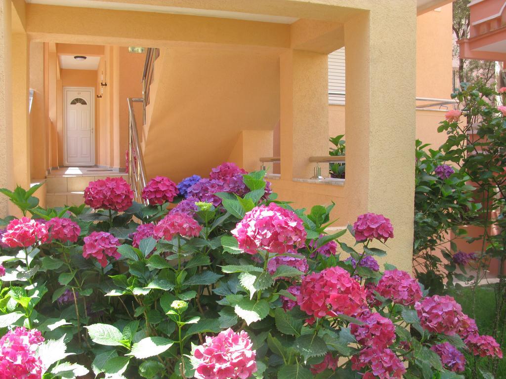 Туры в отель Koral Будва Черногория