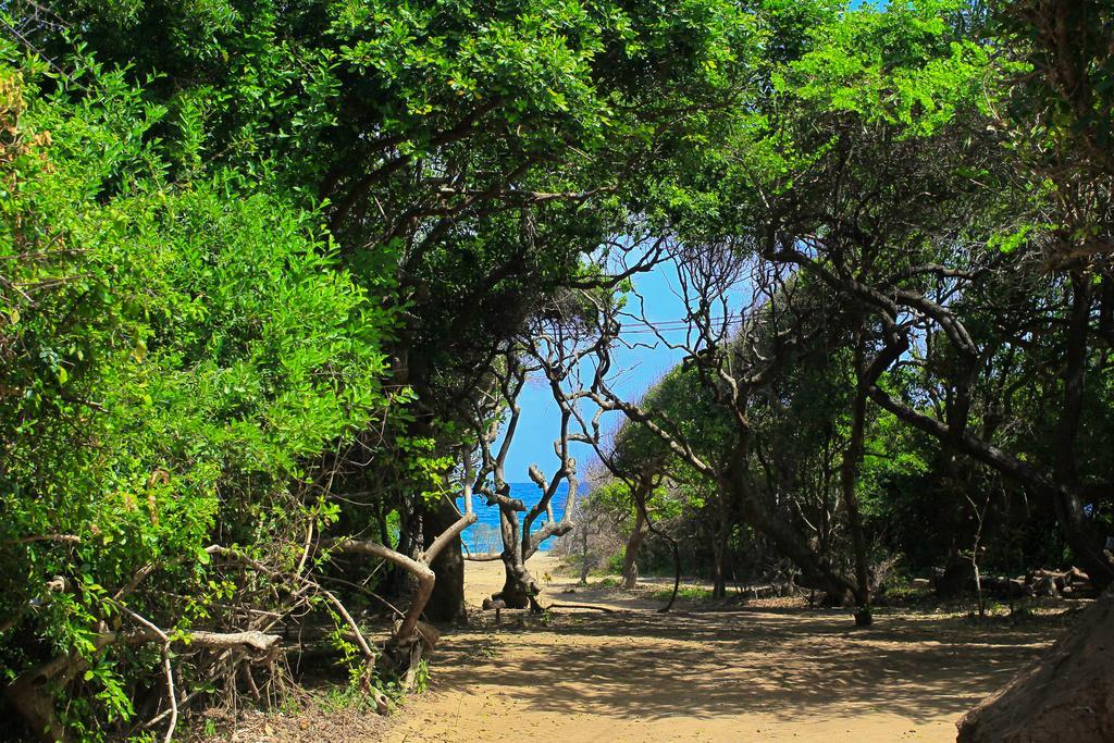 Горящие туры в отель Jungle Beach Тринкомали Шри-Ланка