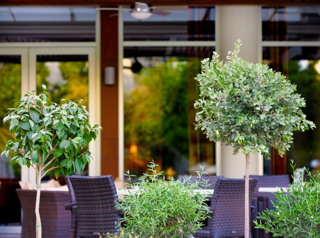 Ajax Hotel цена