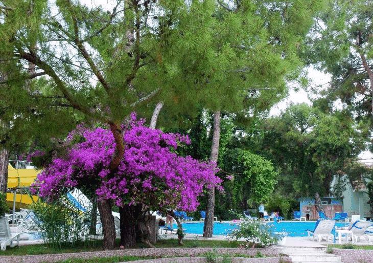 Горящие туры в отель Club Pinara Кемер