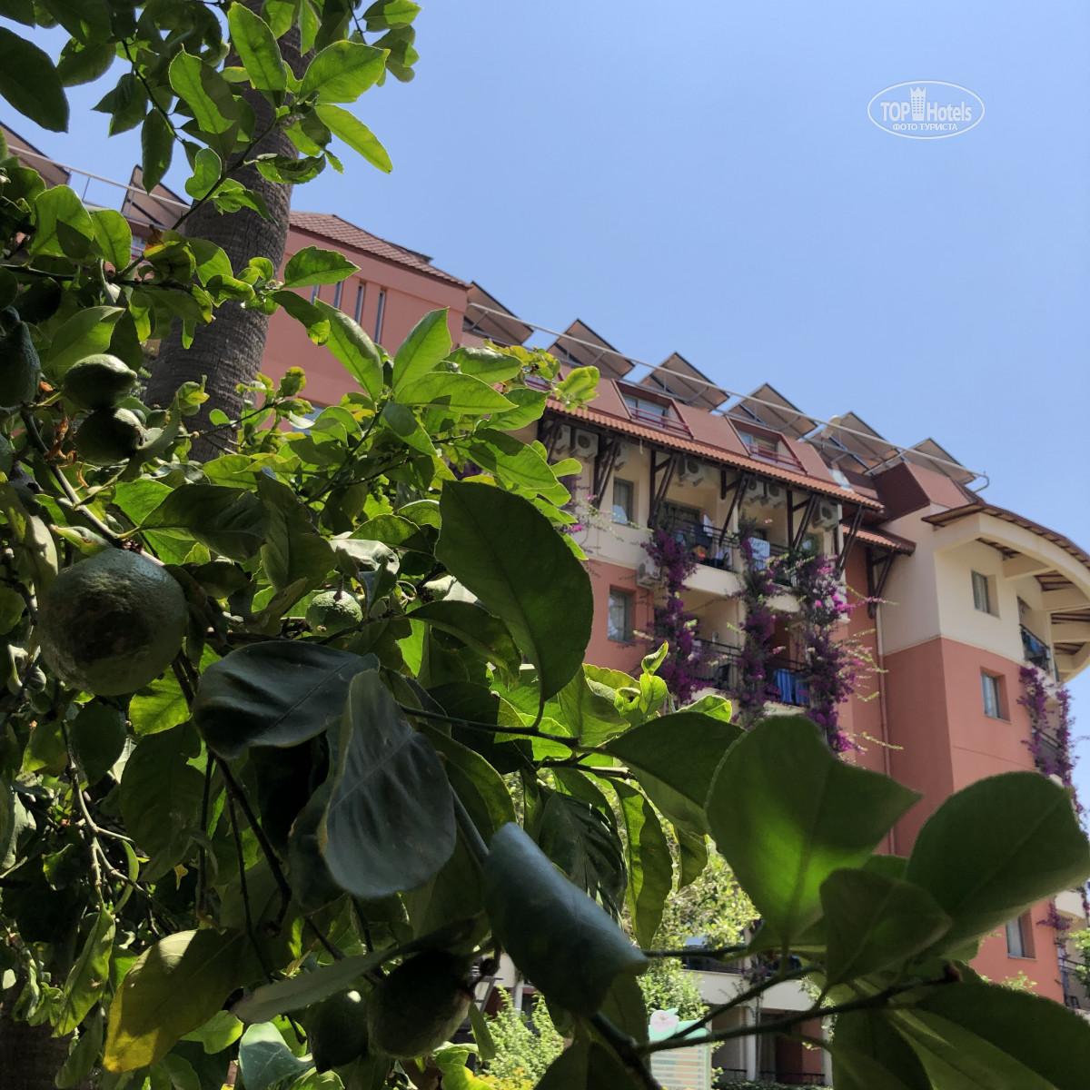 Готель, Palmeras Beach Hotel